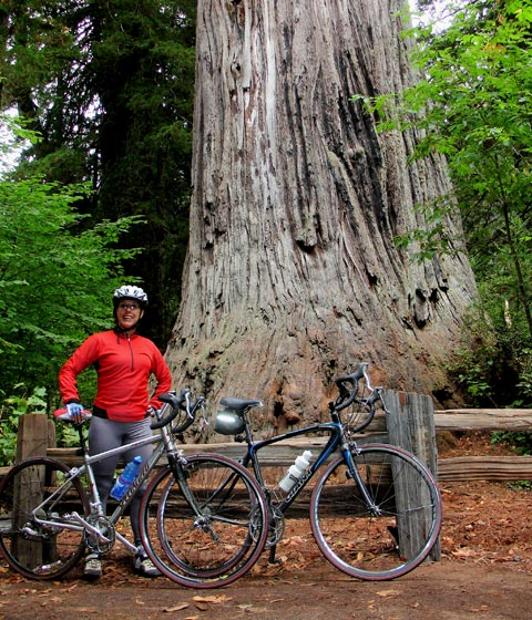 Biking in the Giant Redwood Forest