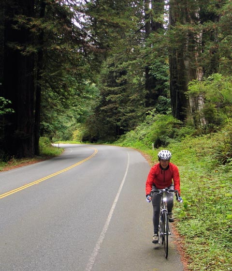 Jeri Road Biking Through Redwoods