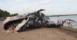 Beached Whale Full of Trash