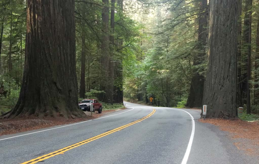 Cycling the Redwood Forest