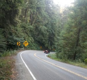 Traffic While Biking the Redwood Forest