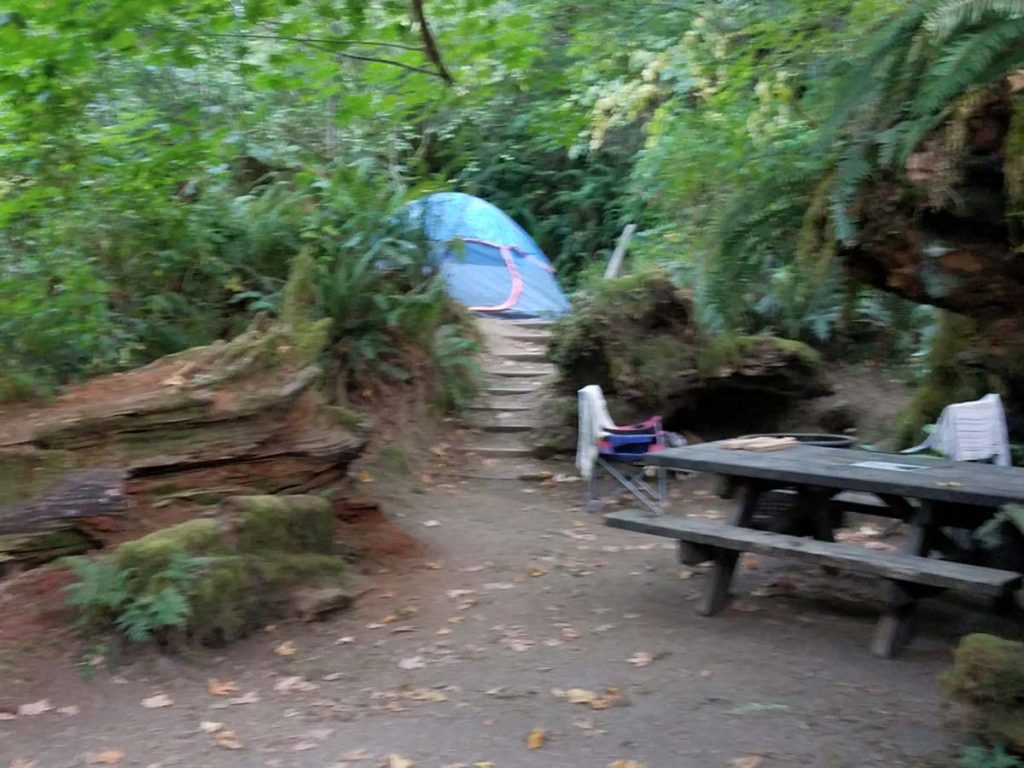 Bike Camping in the Redwoods